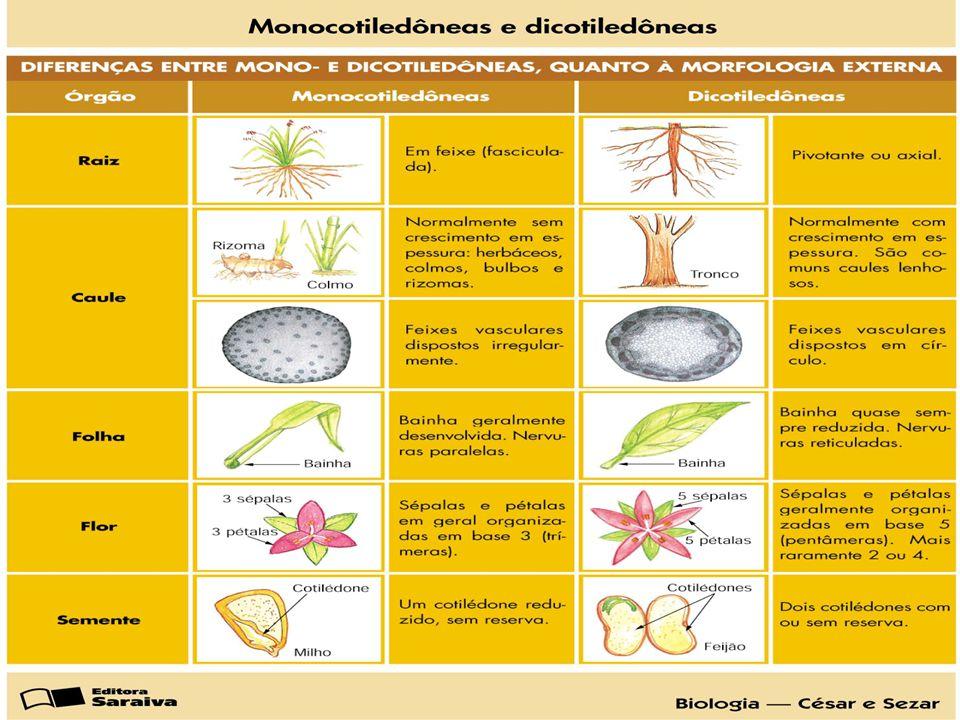 Doença Causada por Bactérias Estrias vermelhas.