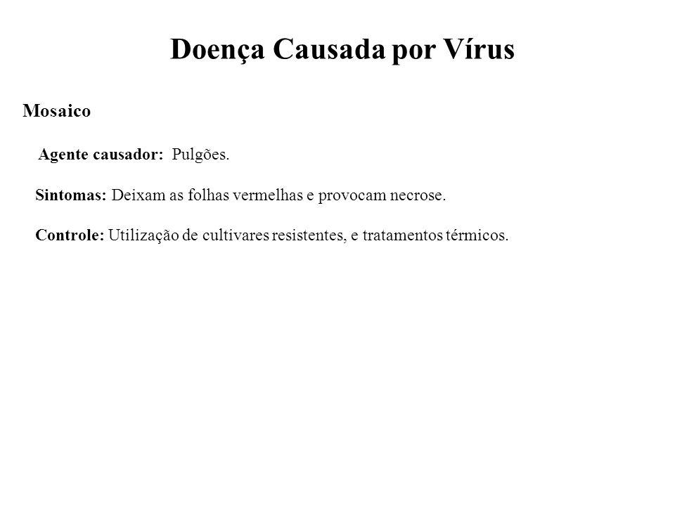 Doença Causada por Vírus Mosaico Agente causador: Pulgões. Sintomas: Deixam as folhas vermelhas e provocam necrose. Controle: Utilização de cultivares