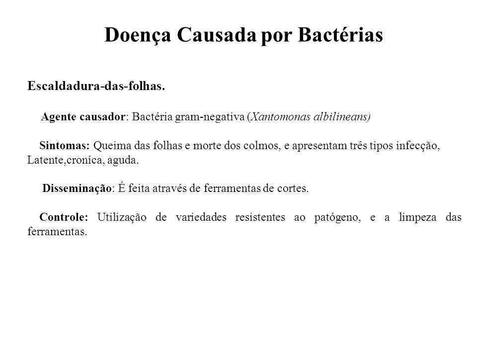 Doença Causada por Bactérias Escaldadura-das-folhas. Agente causador: Bactéria gram-negativa (Xantomonas albilineans) Sintomas: Queima das folhas e mo