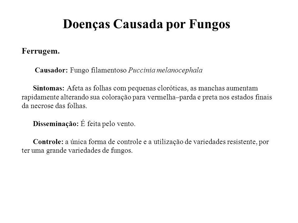 Doenças Causada por Fungos Ferrugem. Causador: Fungo filamentoso Puccinia melanocephala Sintomas: Afeta as folhas com pequenas cloróticas, as manchas