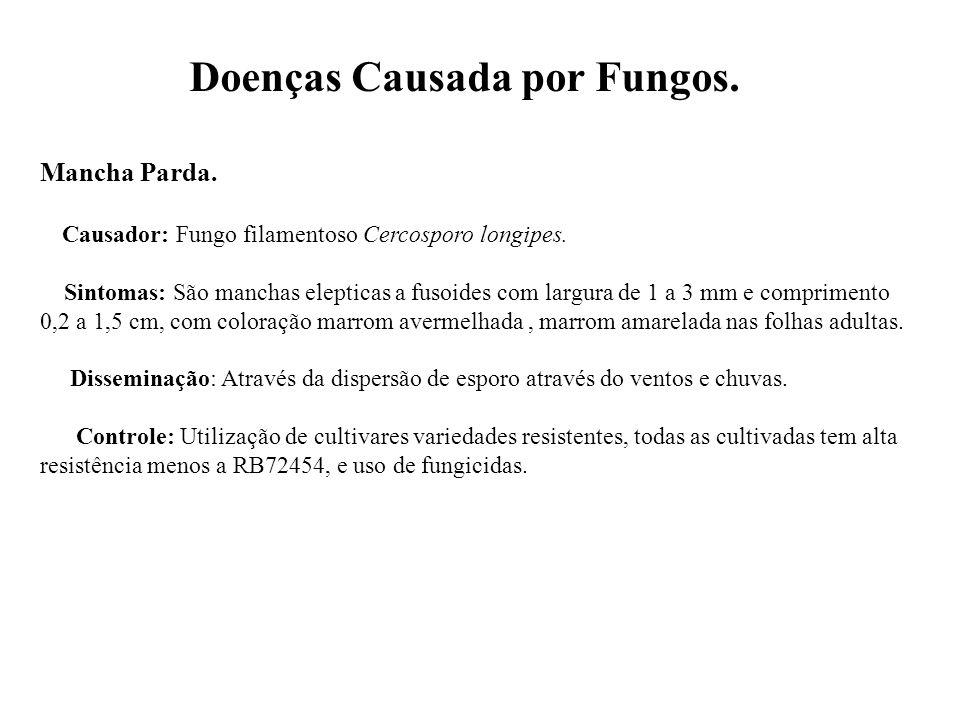Doenças Causada por Fungos.Mancha Parda. Causador: Fungo filamentoso Cercosporo longipes.