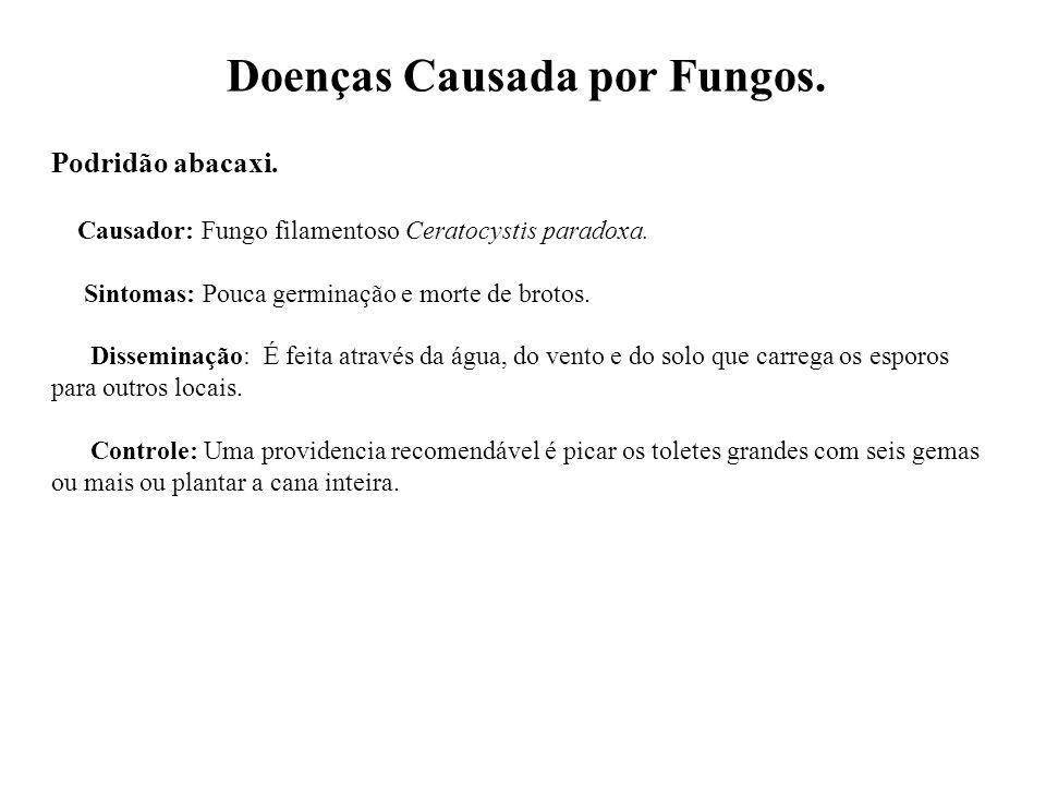 Doenças Causada por Fungos.Podridão abacaxi. Causador: Fungo filamentoso Ceratocystis paradoxa.
