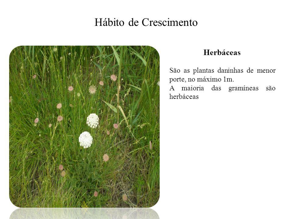 Hábito de Crescimento Herbáceas São as plantas daninhas de menor porte, no máximo 1m. A maioria das gramíneas são herbáceas