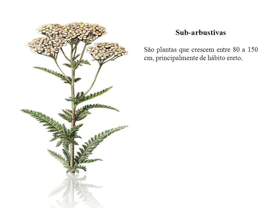 Sub-arbustivas. São plantas que crescem entre 80 a 150 cm, principalmente de hábito ereto.