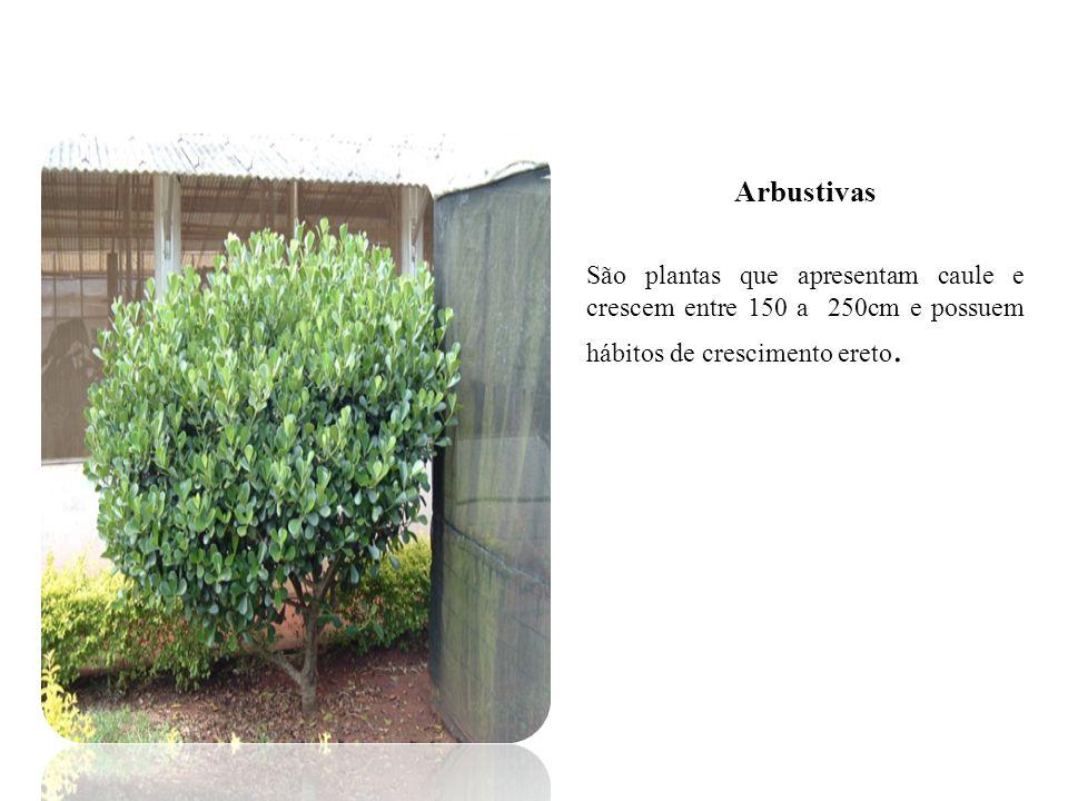 Principais Plantas Daninhas Caruru ( Amaranthus spp.) Apresenta crescimento muito rápido, competindo com a cultura muito cedo.