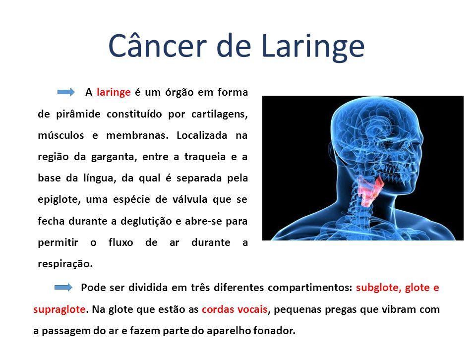 A laringe é um órgão em forma de pirâmide constituído por cartilagens, músculos e membranas.