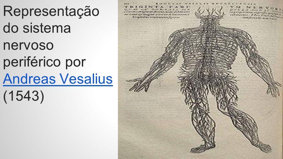 Representação do sistema nervoso periférico por Andreas Vesalius (1543) Andreas Vesalius