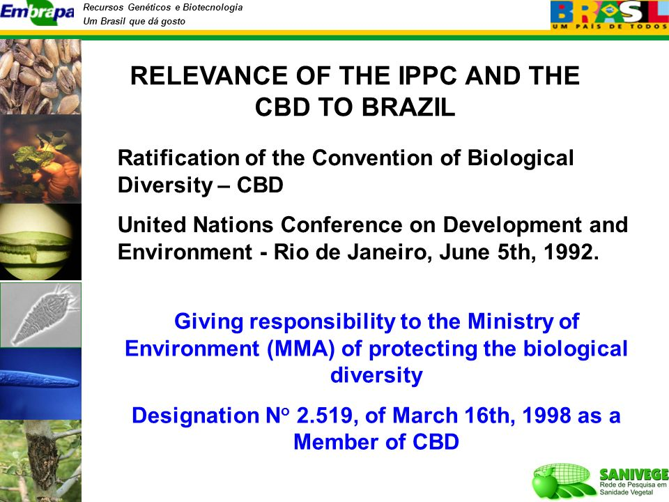 Recursos Genéticos e Biotecnologia Um Brasil que dá gosto Ratification of the Convention of Biological Diversity – CBD United Nations Conference on Development and Environment - Rio de Janeiro, June 5th, 1992.