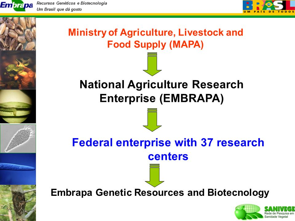 Recursos Genéticos e Biotecnologia Um Brasil que dá gosto National Agriculture Research Enterprise (EMBRAPA) Ministry of Agriculture, Livestock and Food Supply (MAPA) Embrapa Genetic Resources and Biotecnology Federal enterprise with 37 research centers