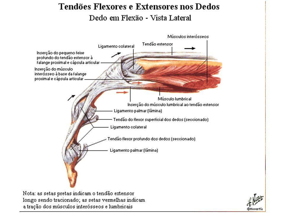 Lesões Tendinosas e Nervosas da Mão - ppt video online carregar