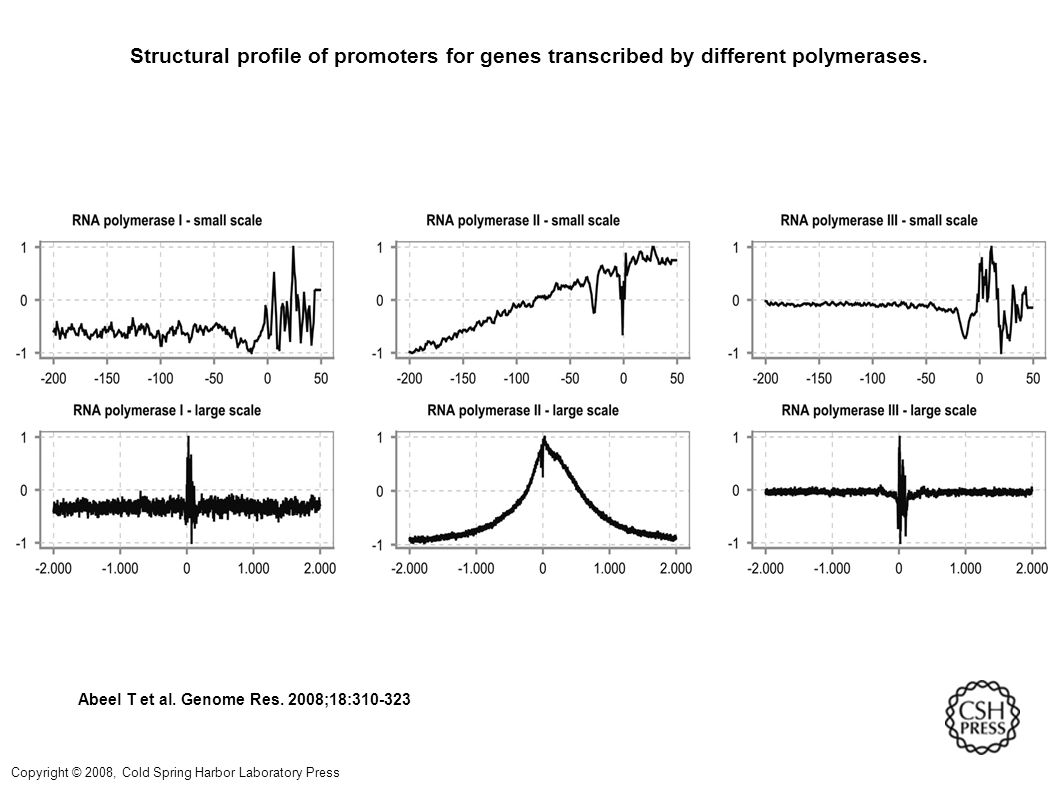 Structural profile of promoters for genes transcribed by different polymerases.