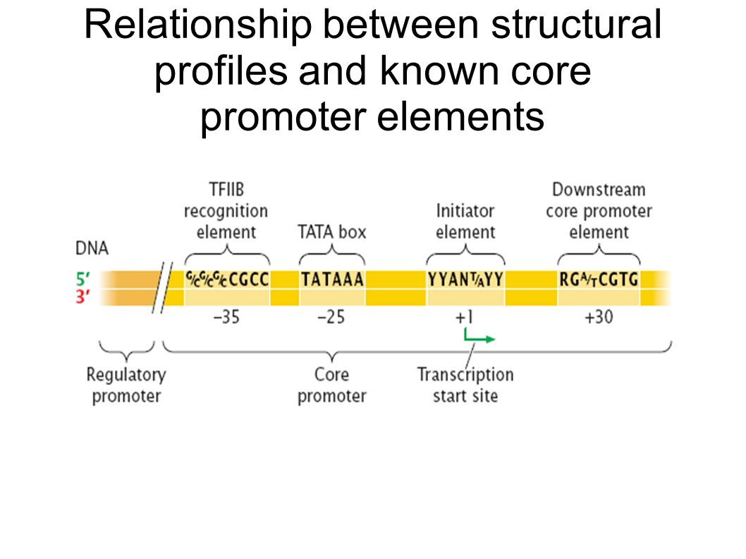 Relationship between structural profiles and known core promoter elements