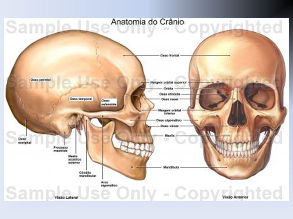 Único Cráneo Radiología Anatomía Bandera - Imágenes de Anatomía ...