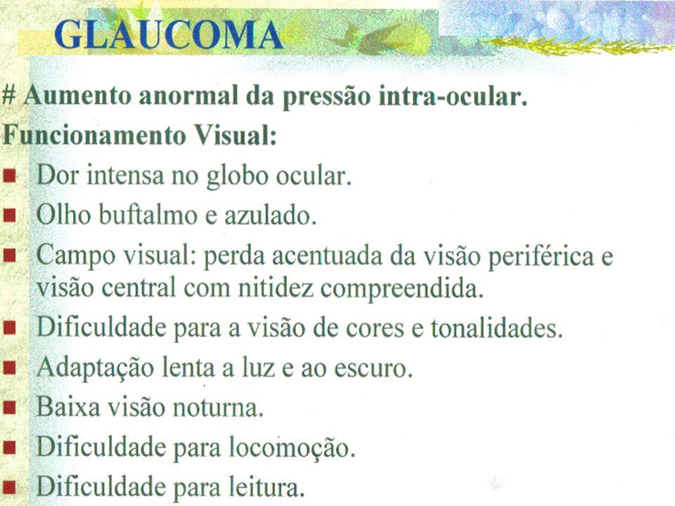 2707faba219e1 GLOBO OCULAR Anatomia e fisiologia. - ppt carregar