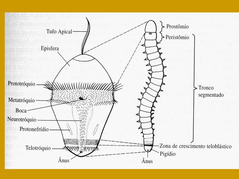 Viermi si paraziți intestinali - tipuri, simptome, tratament - BeHealthy - Viermii sunt viermi