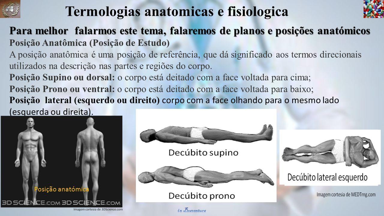 ANATOMIA E FISIOLOGIA HUMANA PARA TURMA DE FARMÁCIA. prof boaventura ...