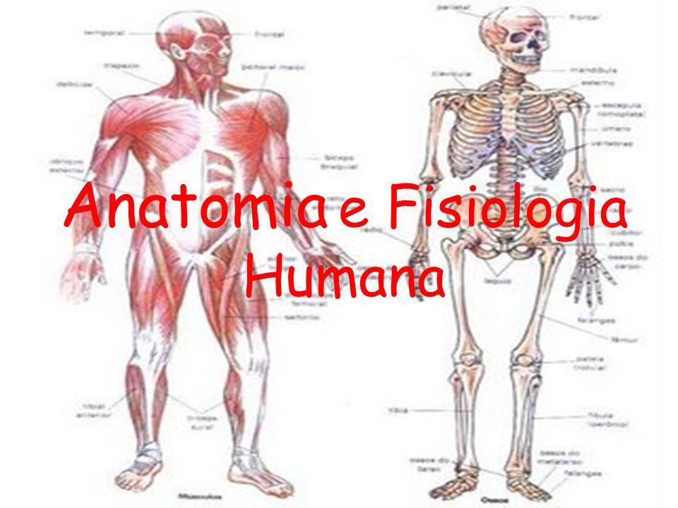 Dorable Anatomía Y Fisiología Humana Fotos - Anatomía de Las ...